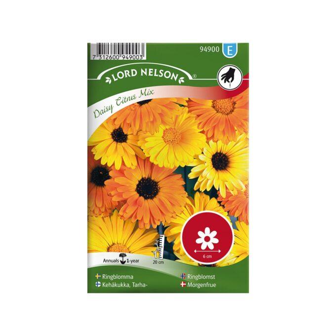 Ringblomst Daisy Citrus Mix - frø fra Nelson Garden