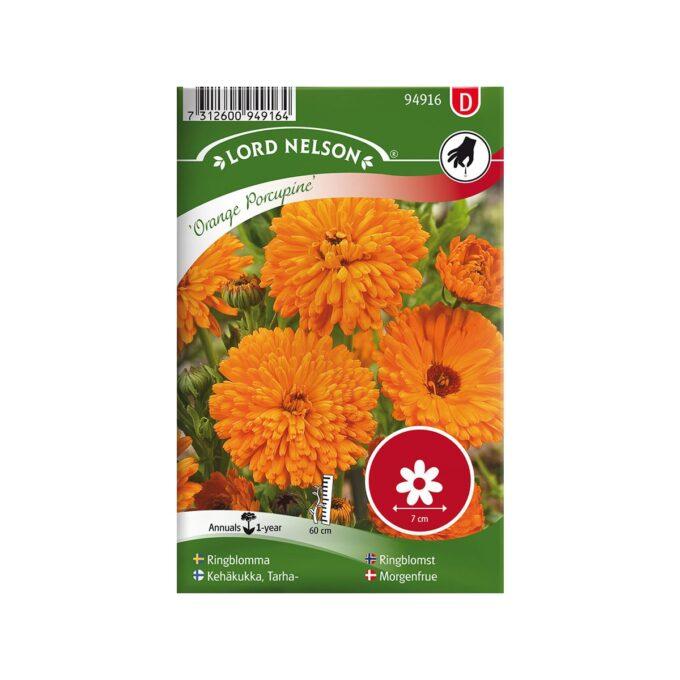 Ringblomst Orange Porcupine - frø fra Nelson Garden
