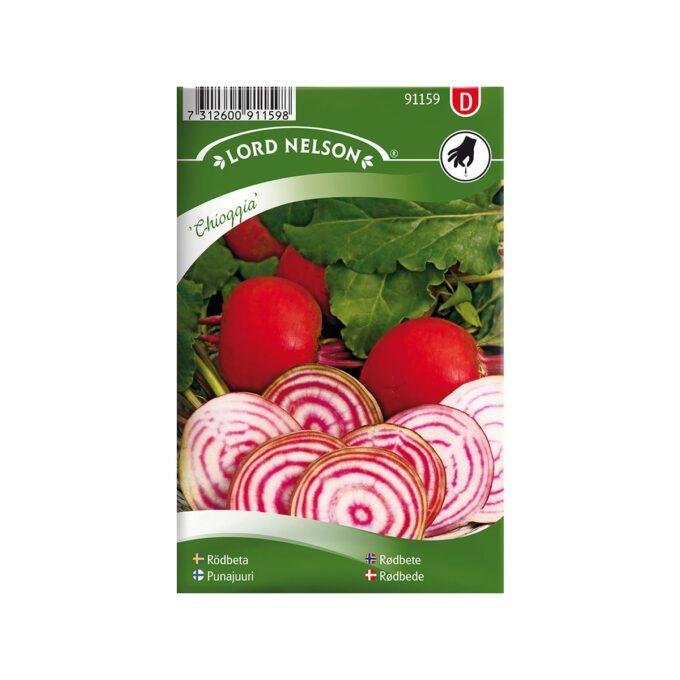 Rødbete Chioggia med hvit og rødstripet grønnsakskjøtt