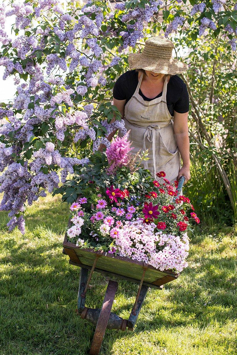 Dame med trillebår full av sommerblomster under syrin