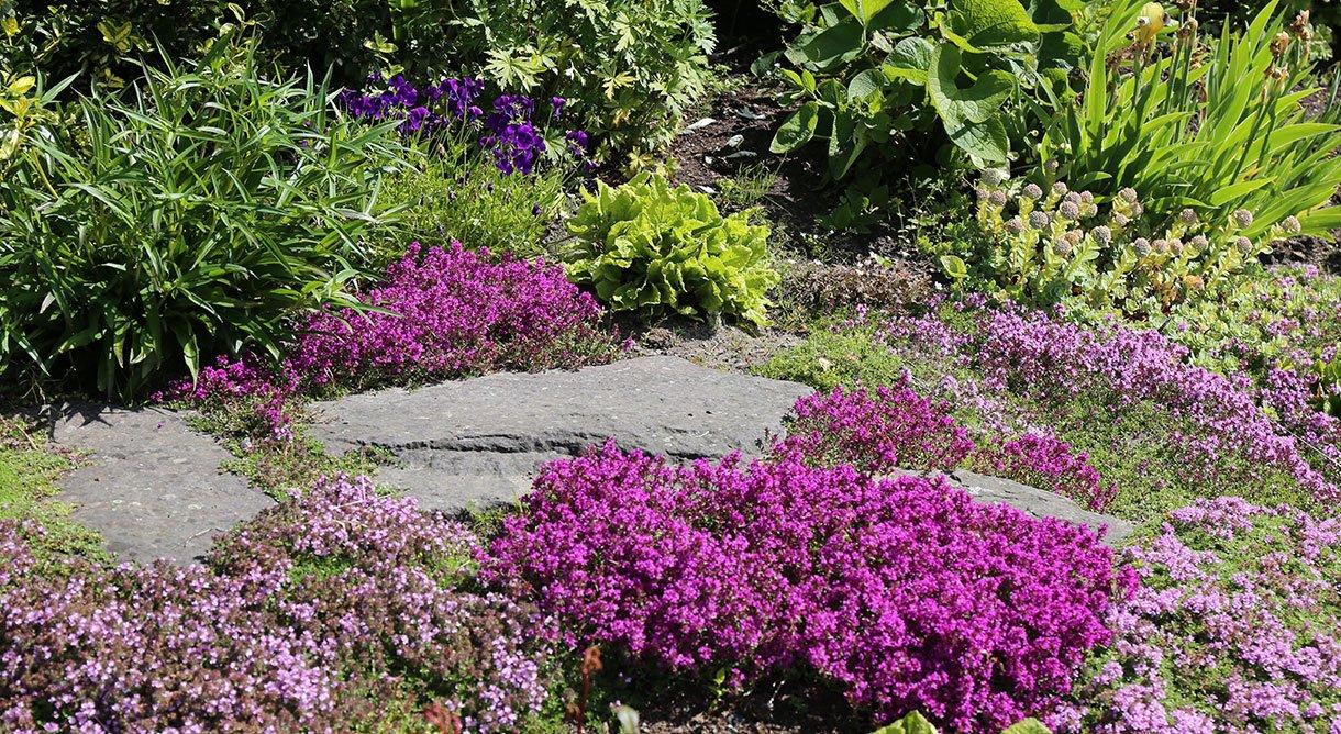 Staudebed med stauder i mange farger i hage