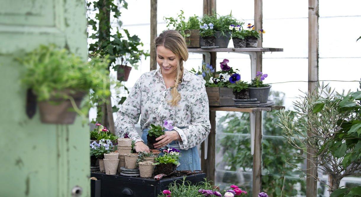 Kvinne omgitt av planter planter ut stemorsblomster i større potter