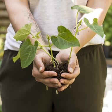 Person holder en ung plante med rotklump forsiktig foran seg
