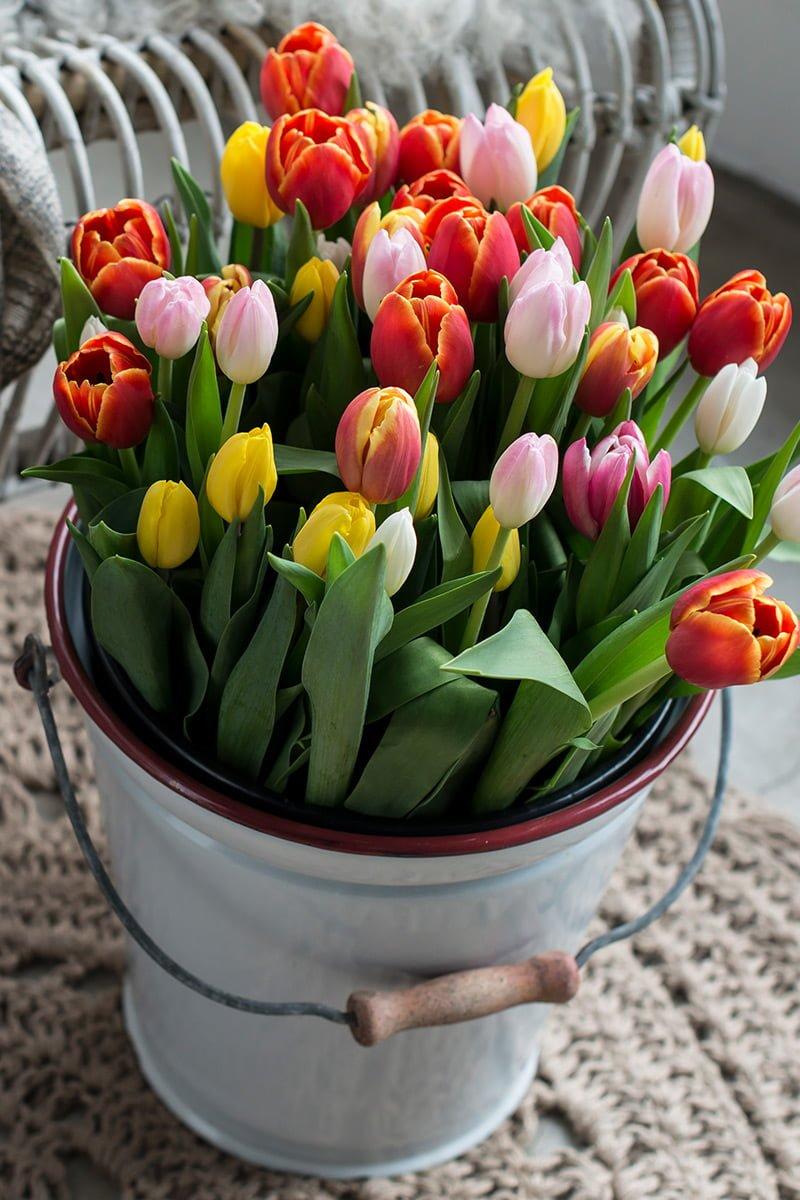 tulipaner bukett mix farger bøtte