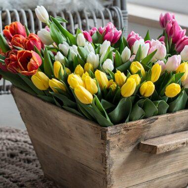 tulipaner farger mix kasse gulv