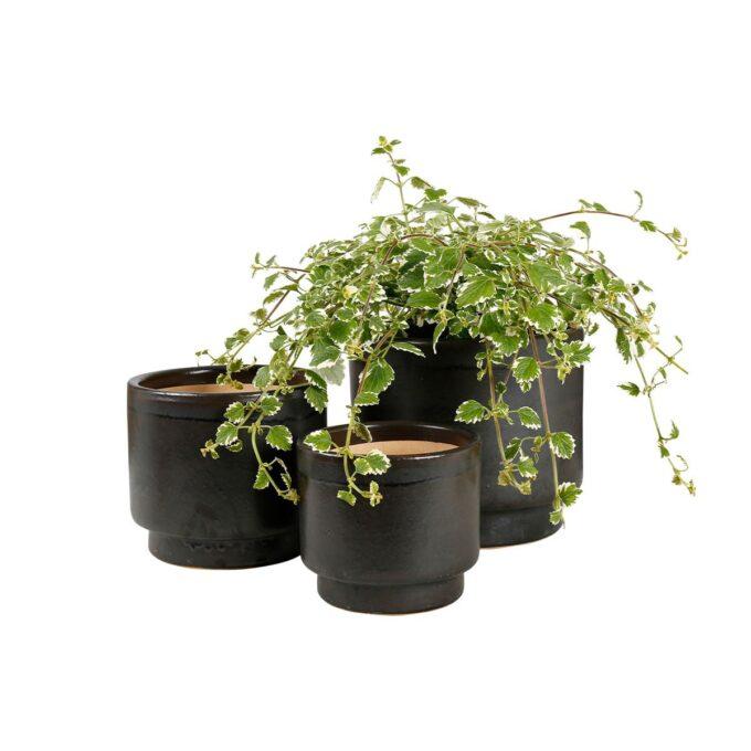 Galantgrå calisto utepotter med plante