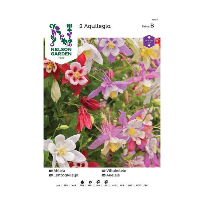 Nelson Garden blomsterløk - akeleie i blandede farger