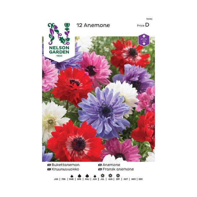 Nelson Garden blomsterløk - doble anemoner i blandede farger