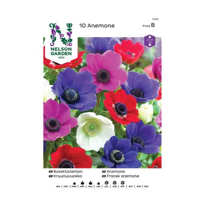 Nelson Garden blomsterløk - enkel anemone i blandede farger