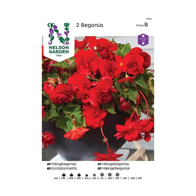 Nelson Garden blomsterløk - hengebegonia
