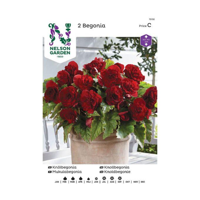 Nelson Garden blomsterløk - dobbel, storblomstrende knollbegonia