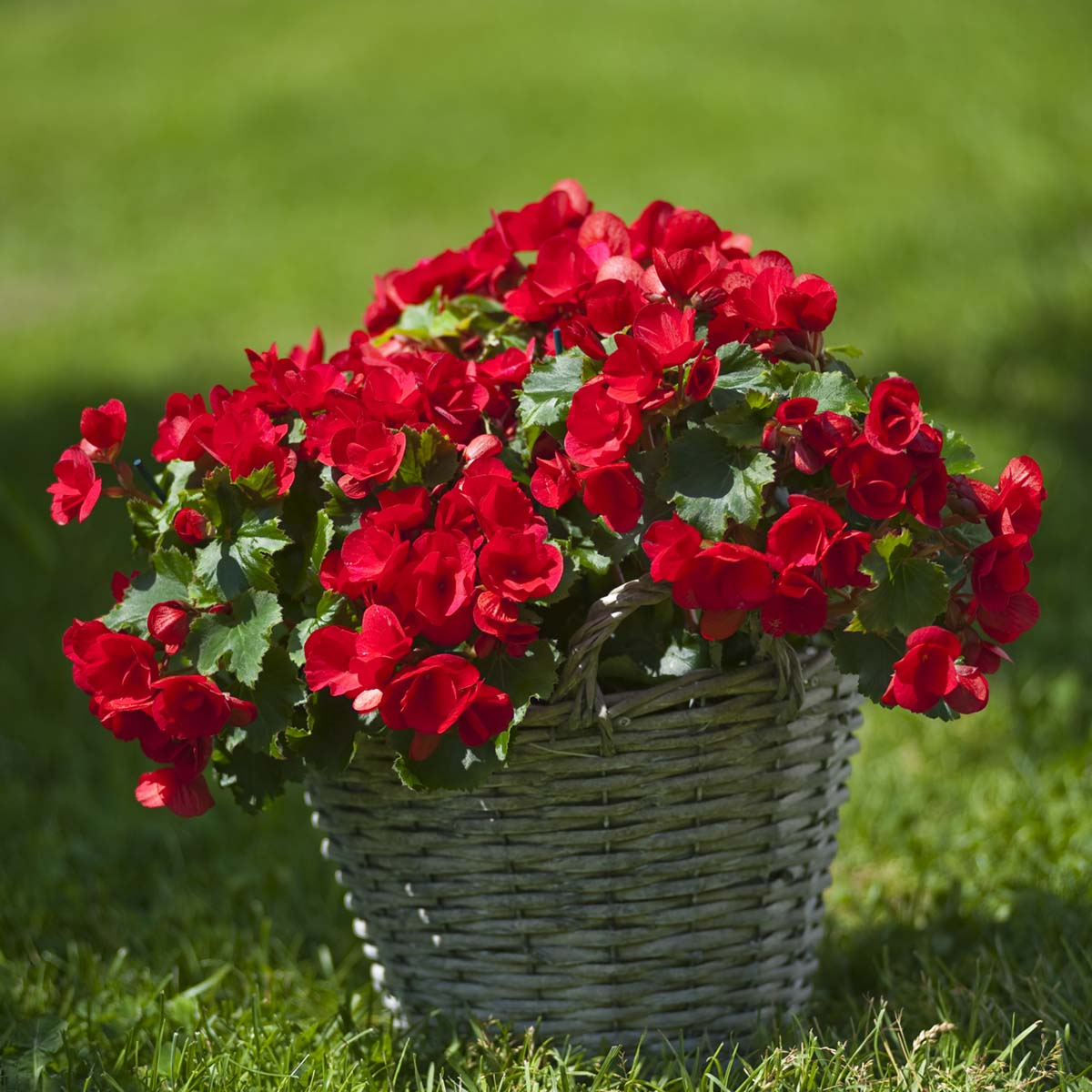 fantoft blomster