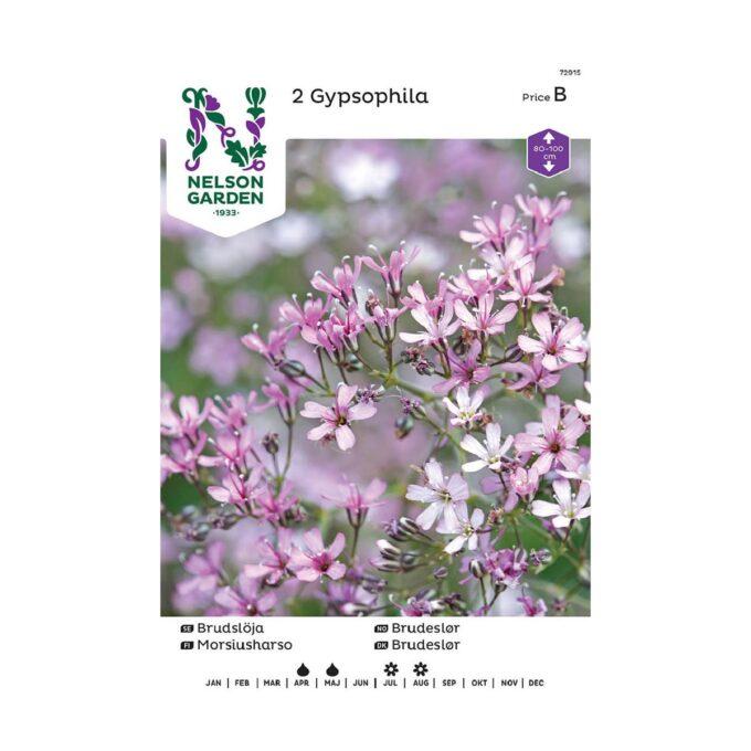 Nelson Garden blomsterløk - rosa brudeslør