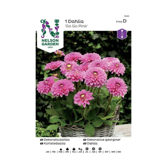 Nelson Garden blomsterløk - dahlia Go Go Pink