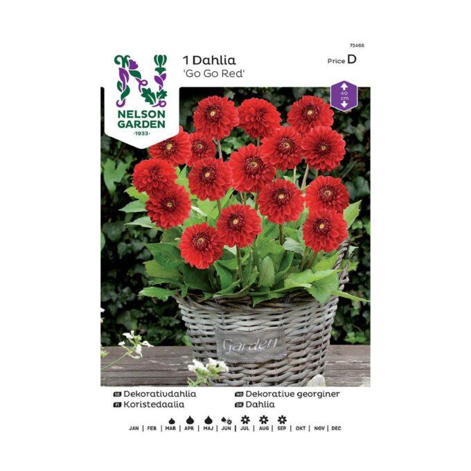 Nelson Garden blomsterløk - dahlia Go Go Red
