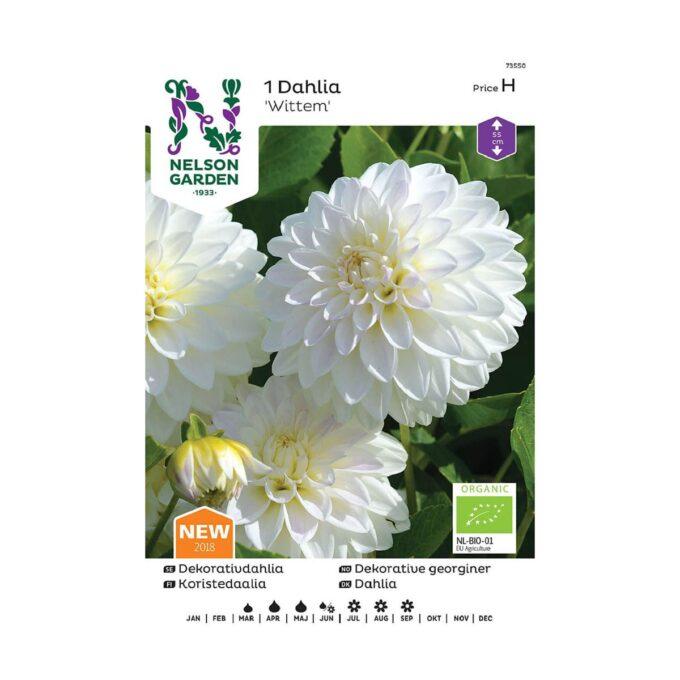 Frøpakke av Nelson Garden blomsterløk - Dahlia georginer hvit