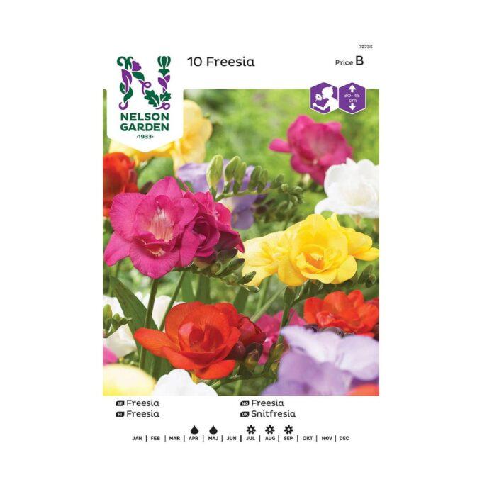 Nelson Garden blomsterløk - dobbel fresia i blandede farger