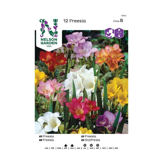 Nelson Garden blomsterløk - enkel freesia i blandede farger