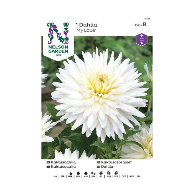Nelson Garden blomsterløk - georgine dahlia hvit My Love