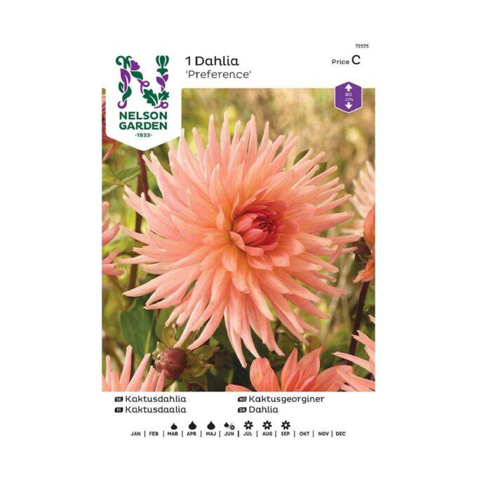 Nelson Garden blomsterløk - rosa Georgine dahlia Preference