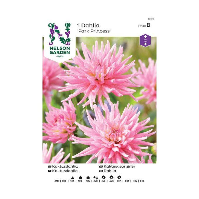 Nelson Garden blomsterløk - rosa georgine Park Princess