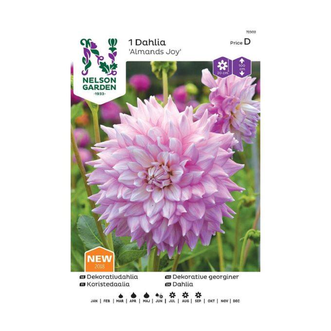 Nelson Garden blomsterløk - Georgine dahlia Almands Joy