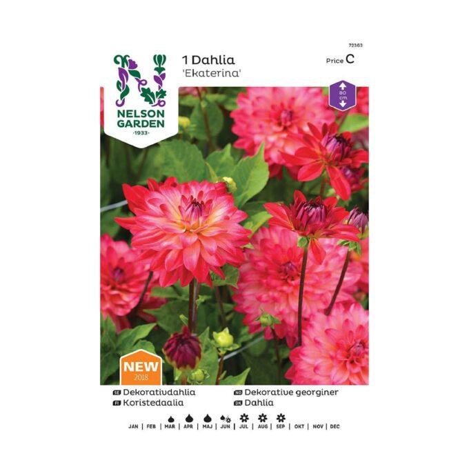 Nelson Garden blomsterløk - Georgine Ekaterina