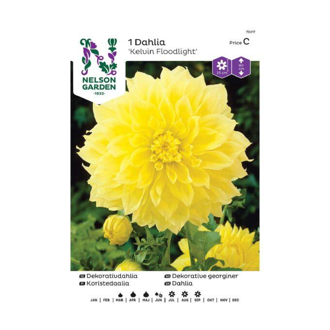 Nelson Garden blomsterløk - Georgine dahlia Kelvin Floodlight