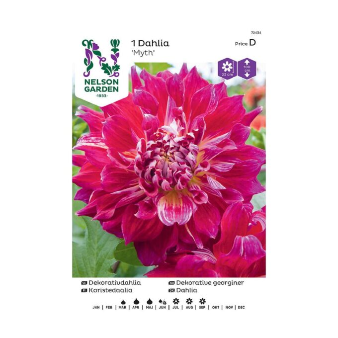 Nelson Garden blomsterløk - georgine Myth