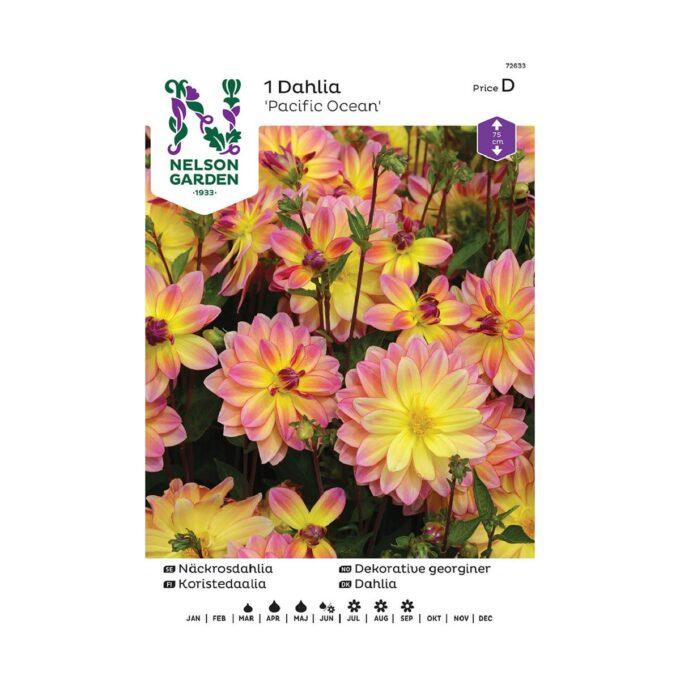 Nelson Garden blomsterløk - georgine Pacific Ocean gul