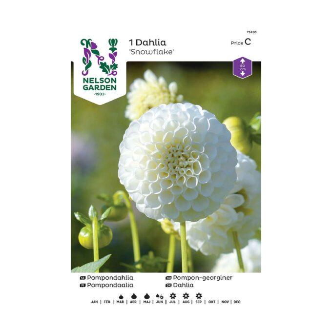 Nelson Garden blomsterløk Georgine Dahlia pompom snowflake