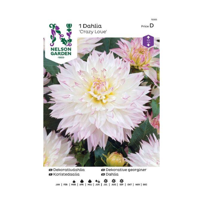 Nelson Garden blomsterløk - hvit og rosa Crazy Love georgine dahlia