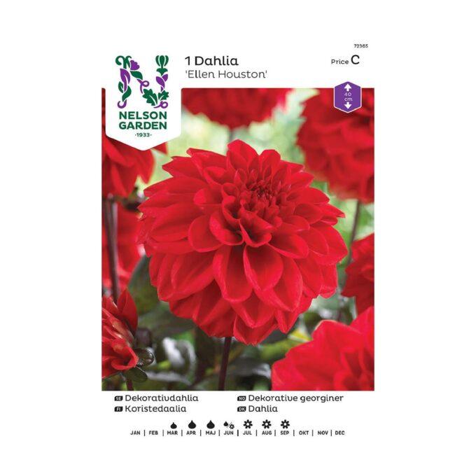 Nelson Garden blomsterløk - rød Ellen Houston dahlia