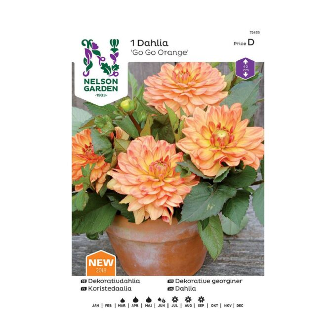 Nelson Garden blomsterløk - georgine Go Go Orange
