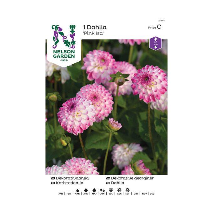 Nelson Garden blomsterløk - georgine dahlia Pink Isa