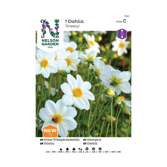 Nelson Garden blomsterløk - Georgine dahlia, enkel, Sneezy