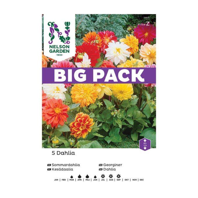 Nelson Garden blomsterløk - georgine Unwins i storpakk