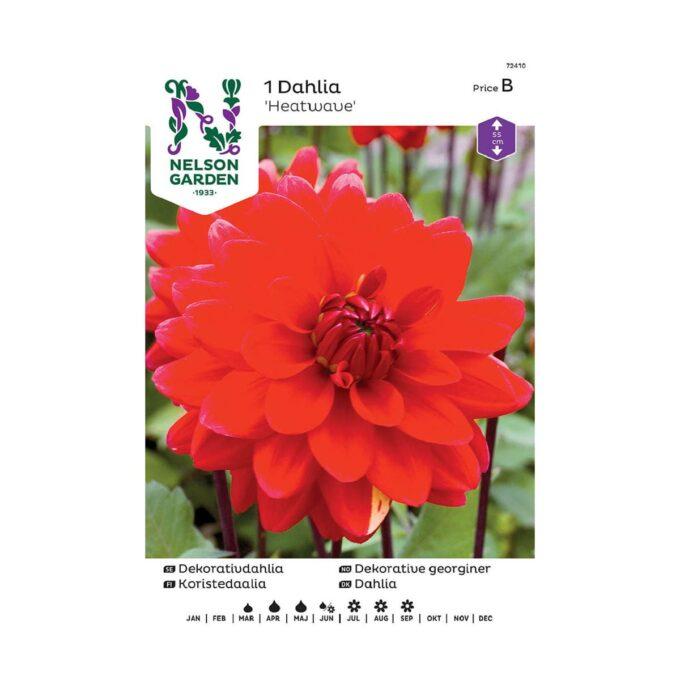 Nelson Garden blomsterløk - georgine dahlia rød heatwave