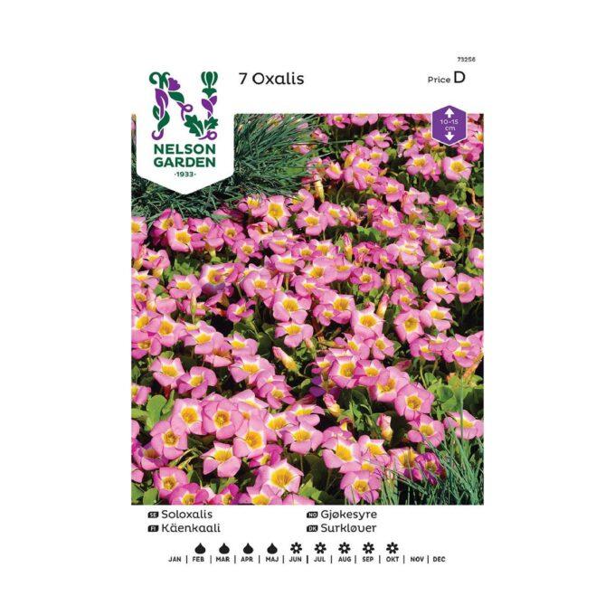 Nelson Garden blomsterløk - gjøkesyre oxalis depressa