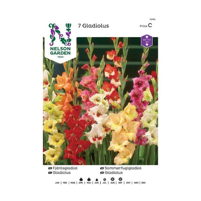 Nelson Garden blomsterløk - sommerfuglgladiol i blandede farger
