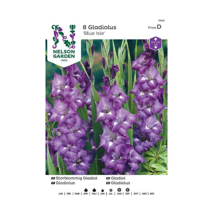 Nelson Garden blomsterløk - storblomstret gladiol Blue Isle