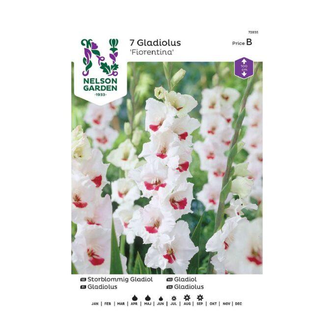 Nelson Garden blomsterløk - storblomstret Fiorentina gladiol