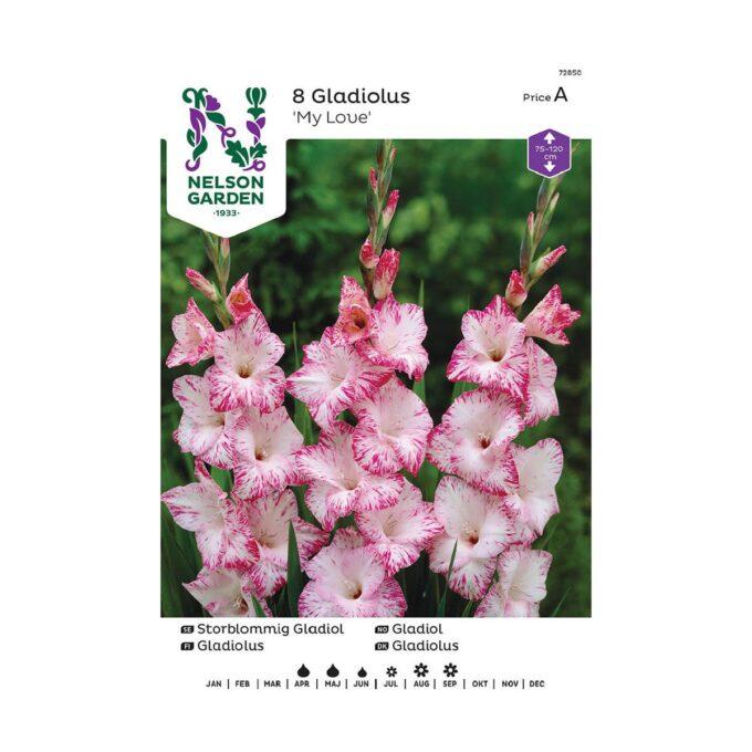 Nelson Garden blomsterløk - storblomstret gladiol My Love, hvitrosa