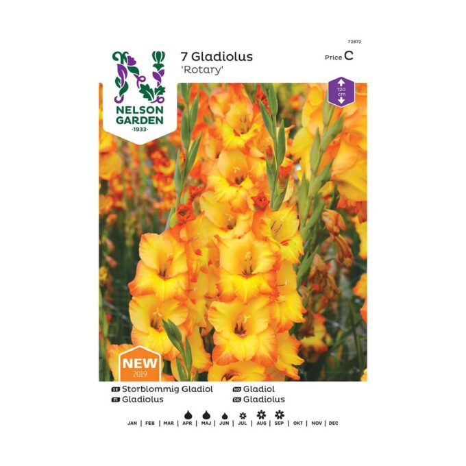 Frøpakke av Nelson Garden blomsterløk - storblomstret gladiol Rotary