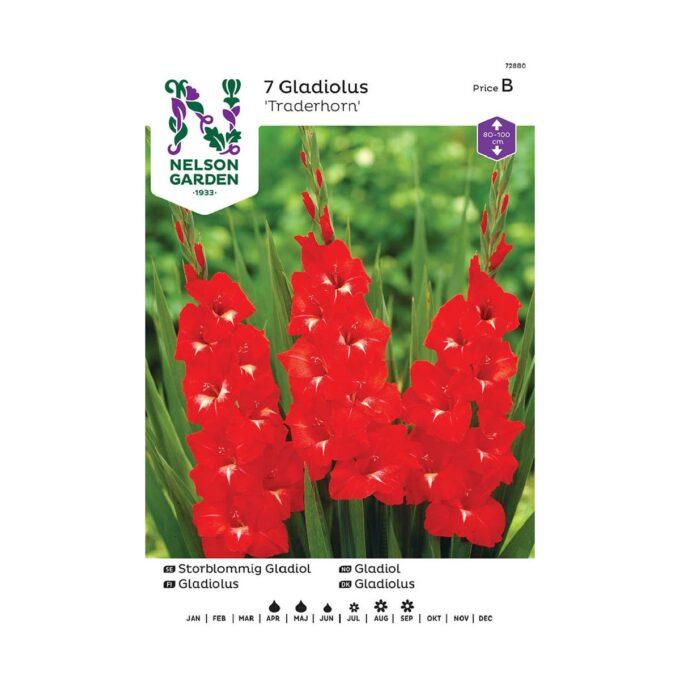 Nelson Garden blomsterløk - Gladiol storblomstret Traderhorn