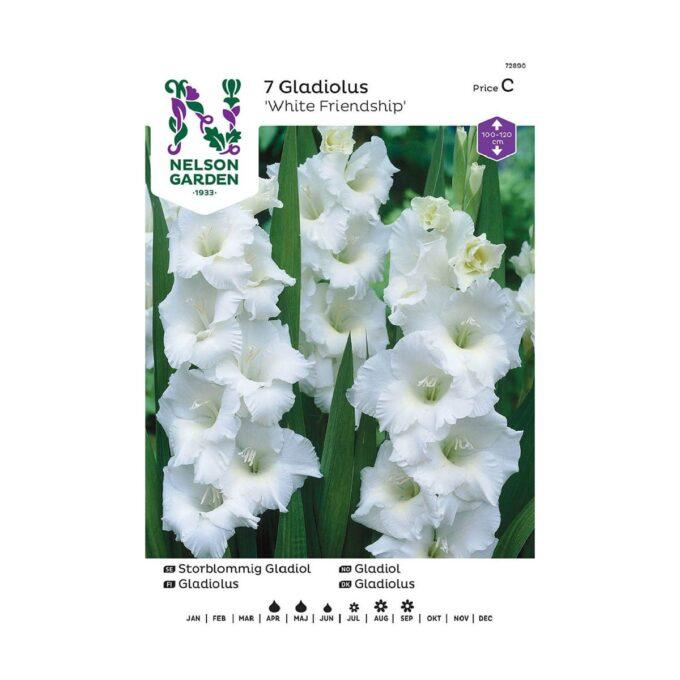 Nelson Garden blomsterløk - storblomstret White Friendship