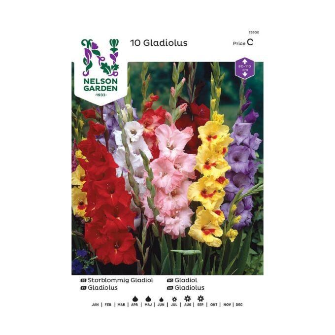 Nelson Garden blomsterløk - storblomstret gladiol i blandede farger