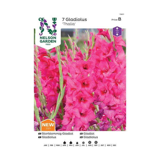 Frøpakke av Nelson Garden blomsterløk - storblomstret gladiol thalia