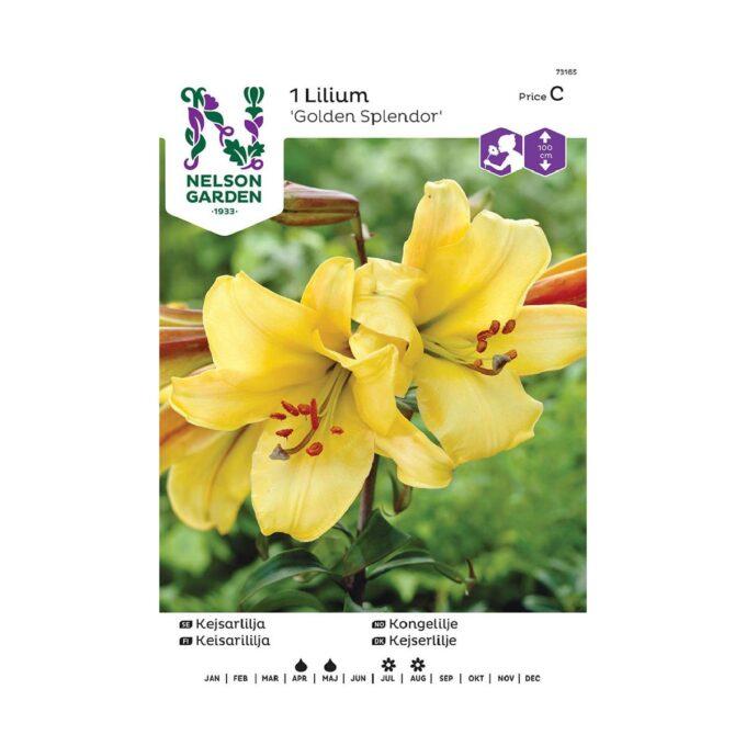 Nelson Garden blomsterløk - gul kongelilje golden splendor