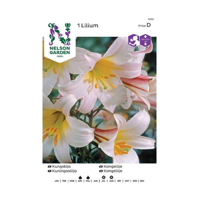 Nelson Garden blomsterløk - hvit kongelilje regale